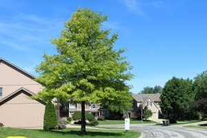Looking for the perfect tree or shrubs to complement your home and landscape? Let Ryan Lawn & Tree help you choose and install the perfect trees and shrubs for your property!