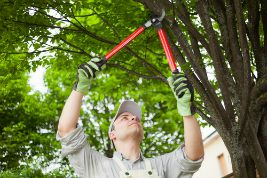 Ryan Lawn & Tree offers tree trimming services for those trees whose branches have become dangerous or out of control.