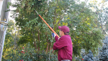 Ryan Lawn & Tree can trim back dangerous or unslighly trees and shrubs in your landscaping.