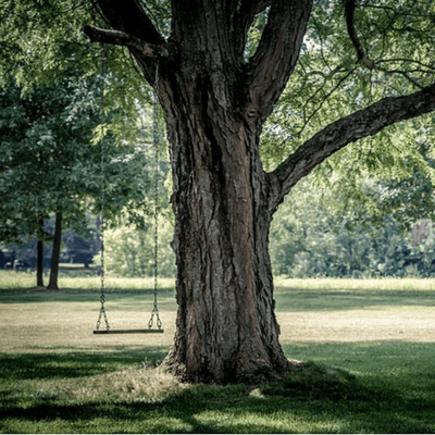 Make sure your tree is safe to hang a swing on.